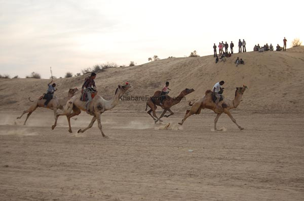 Audions enjoying the camel race -Compition in ending ceremoney of Camel Festival 2011