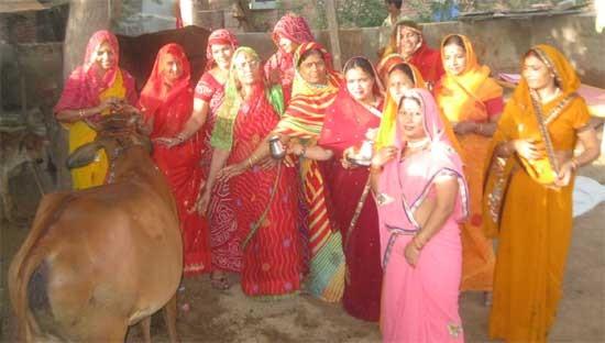 According Hindu Belief Cows Worshiped Toady in Bikaner