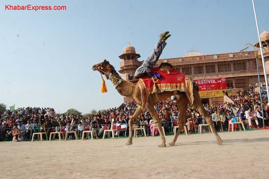A Camel running in the camel runs competition at Ladera