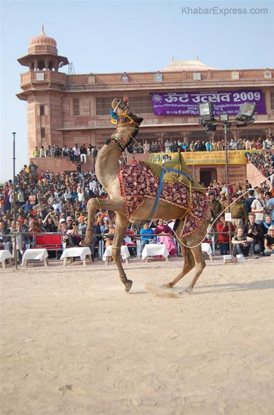 Anchor of the Camel Festival Joyti Prakash Ranga, Sanjya Purohit and Kishore Singh Rajpurohit