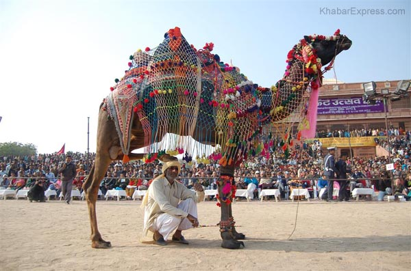 Tourist, local people enjoying various competitions at Ladera village in Camel Festival 2009
