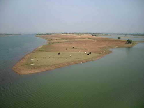 India found at Anas River, Banswara