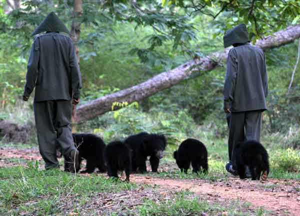 Keepers with  bears cubs during a walk