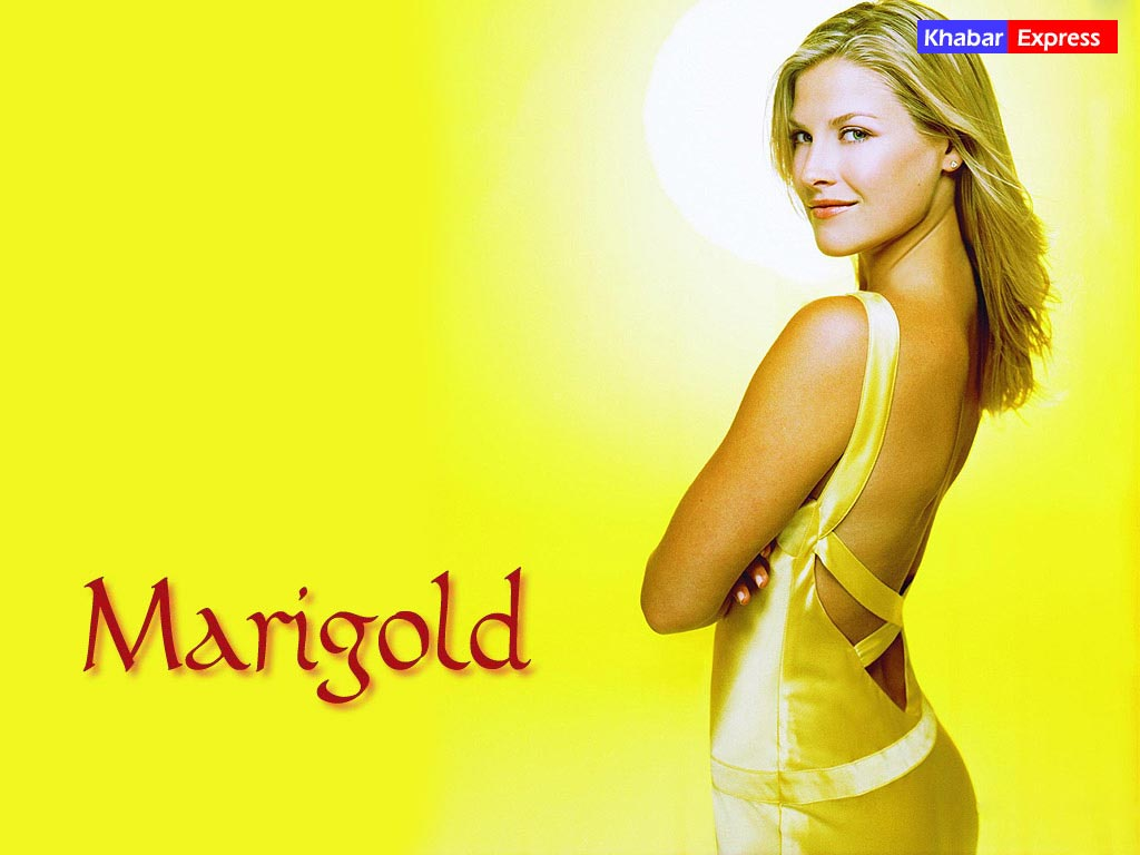 Marigold, National Wallpaper, Movie Wallpaper @ khabarexpress.